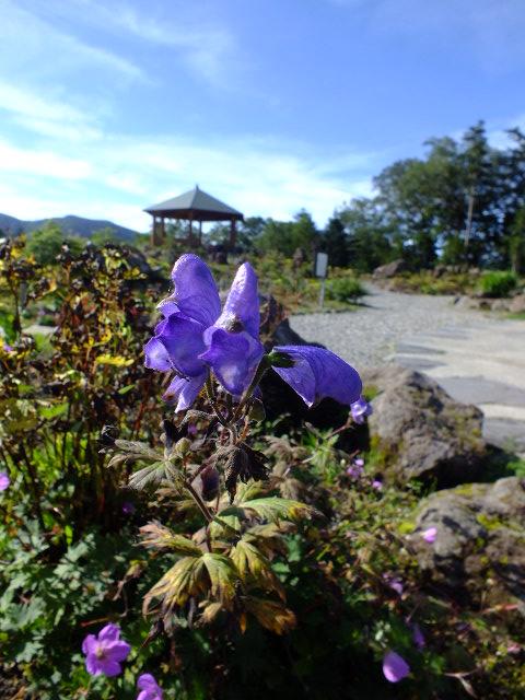 9月6日 日光白根山散策コースの観察_e0145782_15334959.jpg