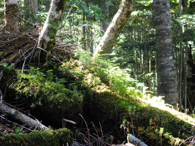 9月6日 日光白根山散策コースの観察_e0145782_15462881.jpg