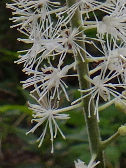 9月5日 戦場ケ原の植物観察_e0145782_1564359.jpg