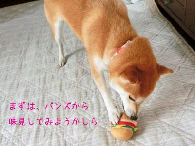 【柴犬ゆめちゃん】食欲の秋?_f0062790_15594201.jpg