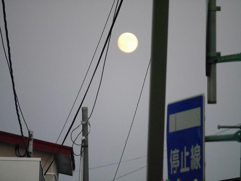 中秋の名月、そしてひやおろし、秋だね!!_f0329091_2302565.jpg