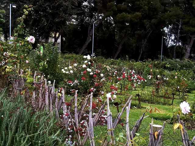 秋のバラ公園_b0064411_05150684.jpg