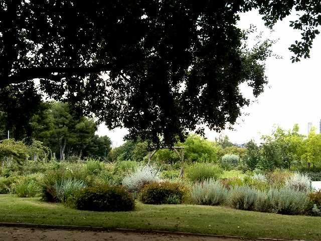 秋のバラ公園_b0064411_05150698.jpg