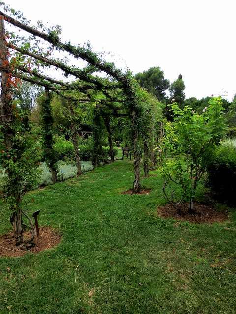 秋のバラ公園_b0064411_05153920.jpg