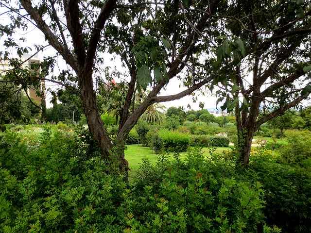 秋のバラ公園_b0064411_05153999.jpg