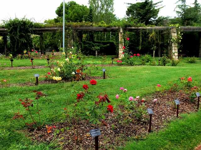 秋のバラ公園_b0064411_05201856.jpg