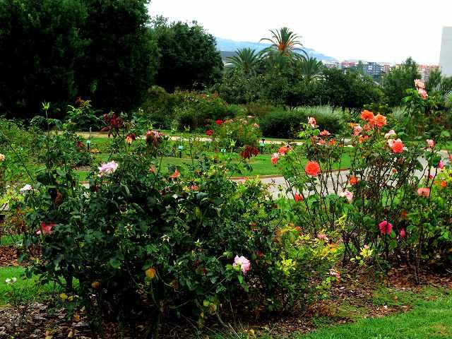 秋のバラ公園_b0064411_05201934.jpg