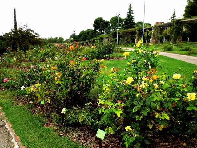 秋のバラ公園_b0064411_05201940.jpg