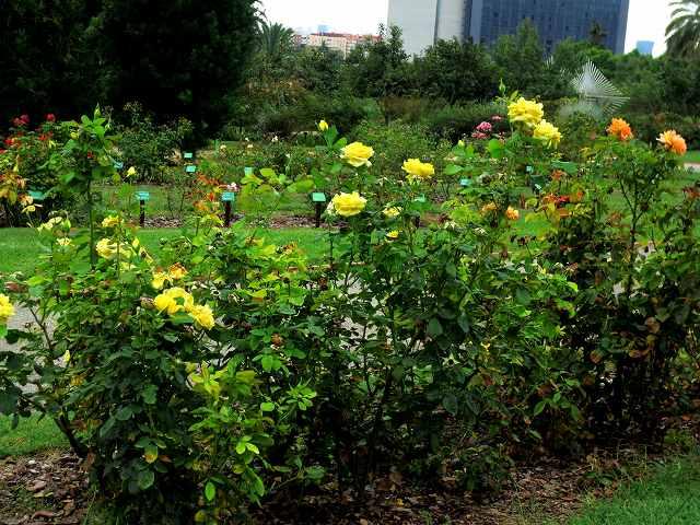 秋のバラ公園_b0064411_05201946.jpg