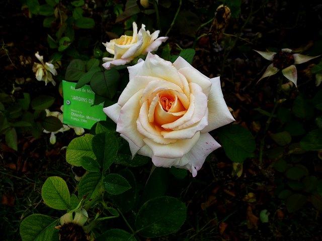 秋のバラ公園_b0064411_05245121.jpg