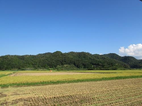 稲刈りが始まりました。_e0214321_15123845.jpg