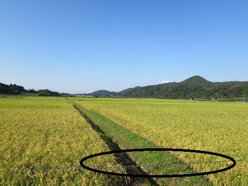 稲刈りが始まりました。_e0214321_1535142.jpg