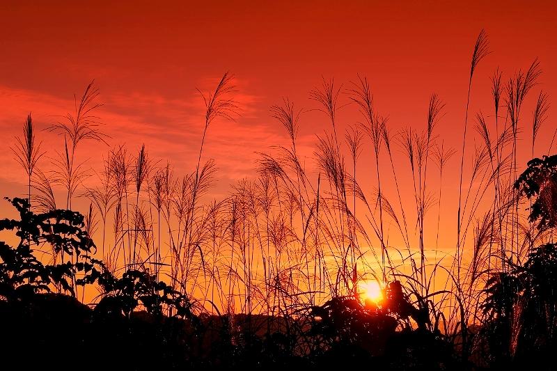 秋の日は釣瓶落とし_b0314043_18270405.jpg