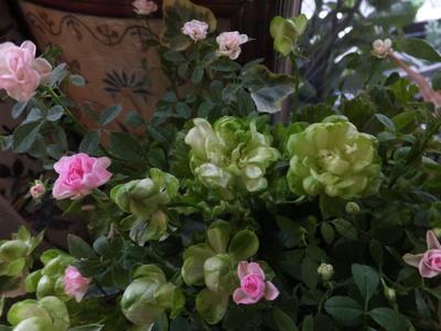 オークリーフ(黄緑色の花)_f0049672_185457.jpg