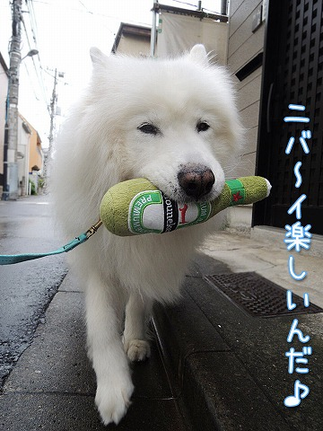 雨上がりお散歩隊_c0062832_7494697.jpg