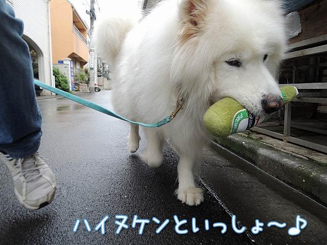 雨上がりお散歩隊_c0062832_7495542.jpg