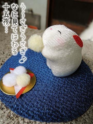 雨上がりお散歩隊_c0062832_750362.jpg