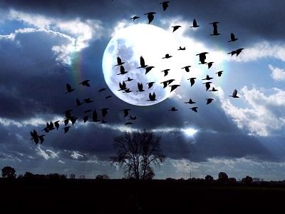 月光第三楽章・等倍速_f0182936_22301827.jpg
