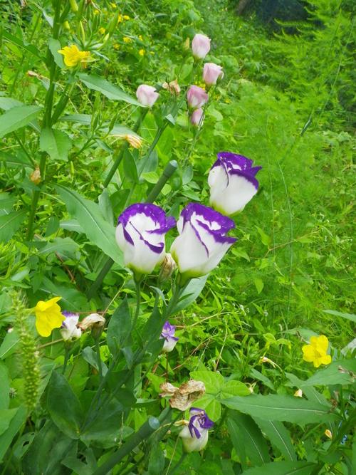 バーチャの庭_b0207642_10434521.jpg
