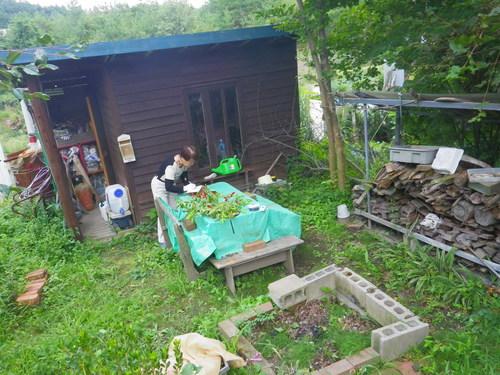 バーチャの庭_b0207642_10461394.jpg