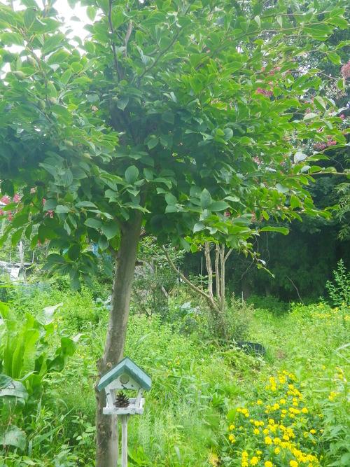 バーチャの庭_b0207642_10575444.jpg