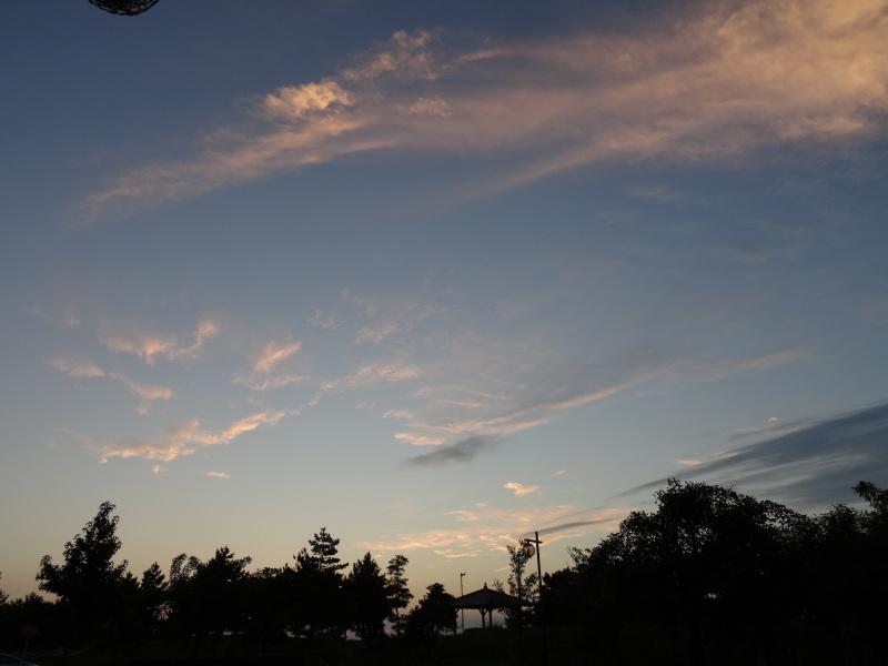 大阪府立大学『カニ調査』第12日   in  せんなん里海公園     by     (TATE-misaki)_c0108460_09450692.jpg