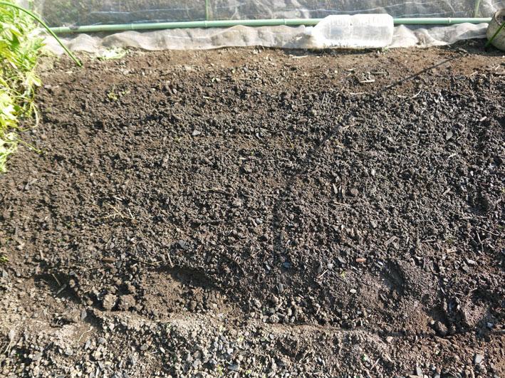 今年もブロッコリー、ハクサイ、キャベツの苗を植え付け_c0014967_10463382.jpg