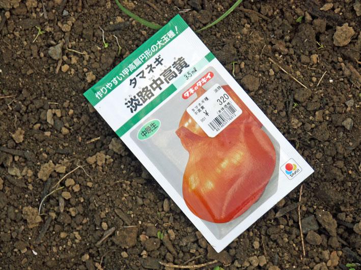 今年もブロッコリー、ハクサイ、キャベツの苗を植え付け_c0014967_10564927.jpg