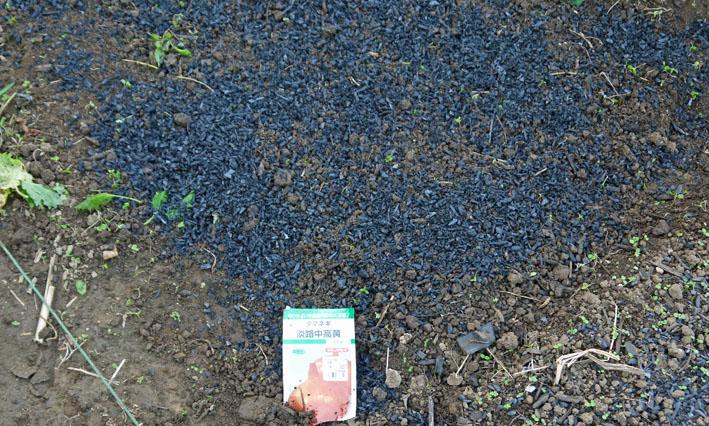 今年もブロッコリー、ハクサイ、キャベツの苗を植え付け_c0014967_1057084.jpg