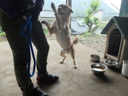 犬猫牛まつり 6:夏の雪山_a0180681_21481976.jpg