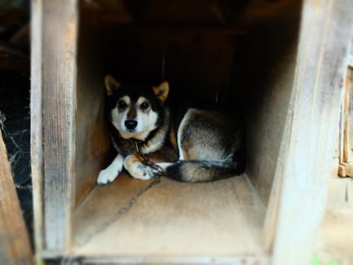 犬猫牛まつり 6:夏の雪山_a0180681_21492135.jpg