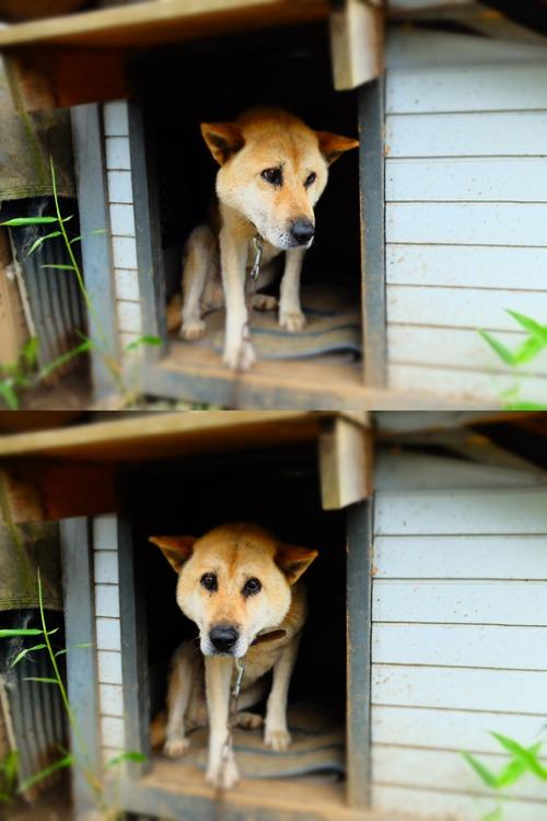 犬猫牛まつり 6:夏の雪山_a0180681_2150549.jpg