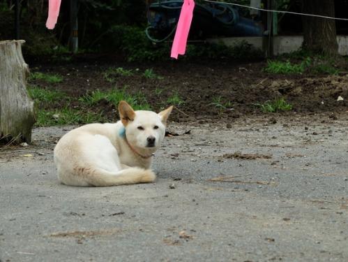 犬猫牛まつり 5:牛_a0180681_2233334.jpg