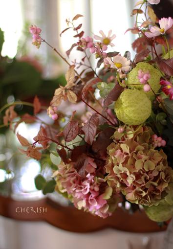秋桜の季節がやってきた_b0208604_13371226.jpg