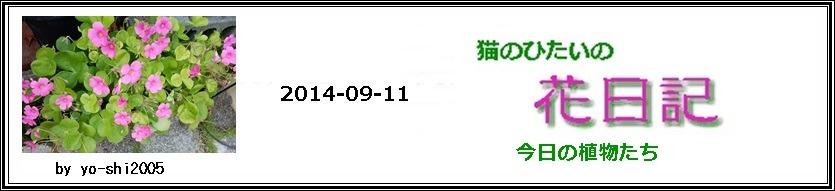 e0033229_17315432.jpg