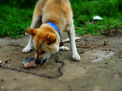犬猫牛まつり 6:夏の雪山_a0180681_1382344.jpg