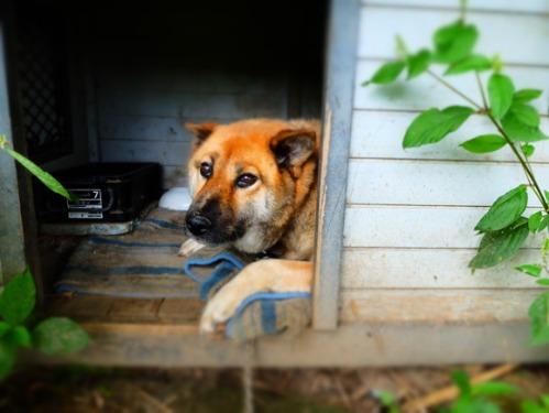 犬猫牛まつり 6:夏の雪山_a0180681_1383562.jpg