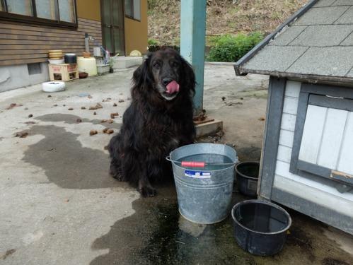 犬猫牛まつり 6:夏の雪山_a0180681_1392458.jpg