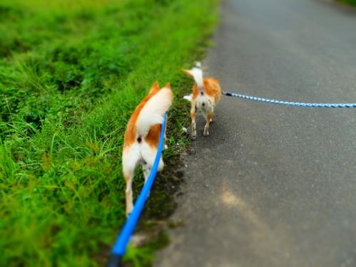 犬猫牛まつり 6:夏の雪山_a0180681_1395994.jpg