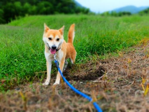 犬猫牛まつり 6:夏の雪山_a0180681_1405177.jpg