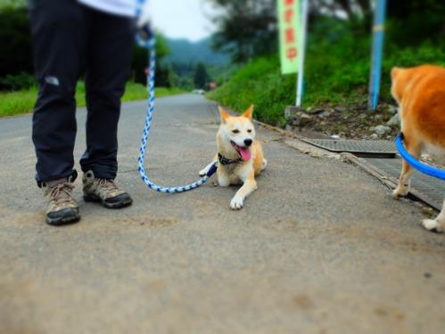 犬猫牛まつり 6:夏の雪山_a0180681_141182.jpg