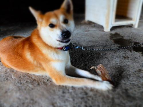 犬猫牛まつり 6:夏の雪山_a0180681_1421770.jpg