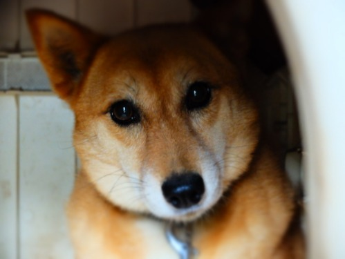 犬猫牛まつり 6:夏の雪山_a0180681_1423259.jpg