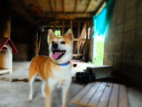 犬猫牛まつり 6:夏の雪山_a0180681_1424767.jpg