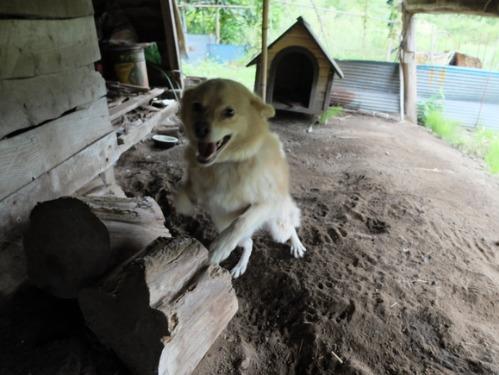 犬猫牛まつり 7:泥の重さ_a0180681_1521352.jpg