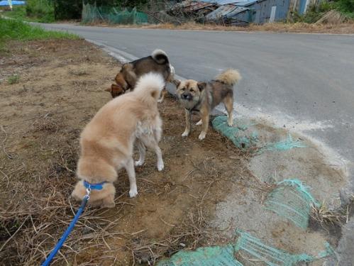 犬猫牛まつり 7:泥の重さ_a0180681_1521832.jpg