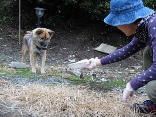 犬猫牛まつり 7:泥の重さ_a0180681_1525357.jpg