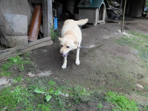 犬猫牛まつり 7:泥の重さ_a0180681_152963.jpg