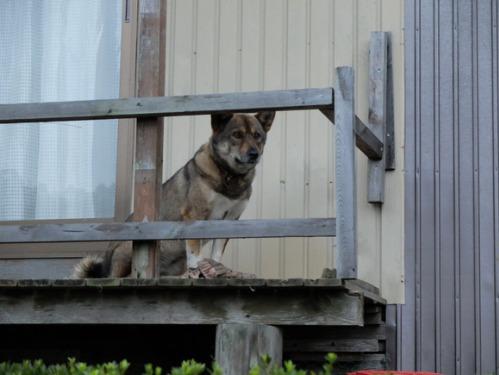 犬猫牛まつり 7:泥の重さ_a0180681_153338.jpg