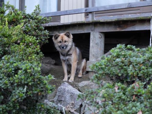 犬猫牛まつり 7:泥の重さ_a0180681_1533675.jpg